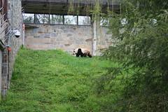 20090422 - DC Trip Part 3 - National Zoo