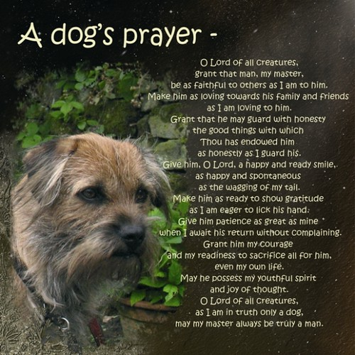 how to train your dog to pray