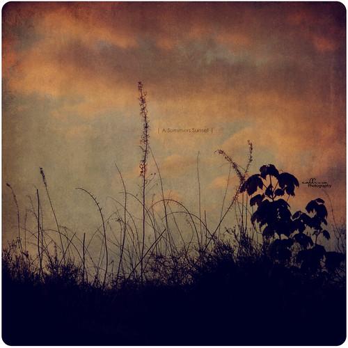 sunset sky texture silhouette clouds weeds redandblue monday 365project callissacaffull