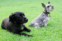 pets on a lawn