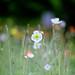 look ! by mosbies