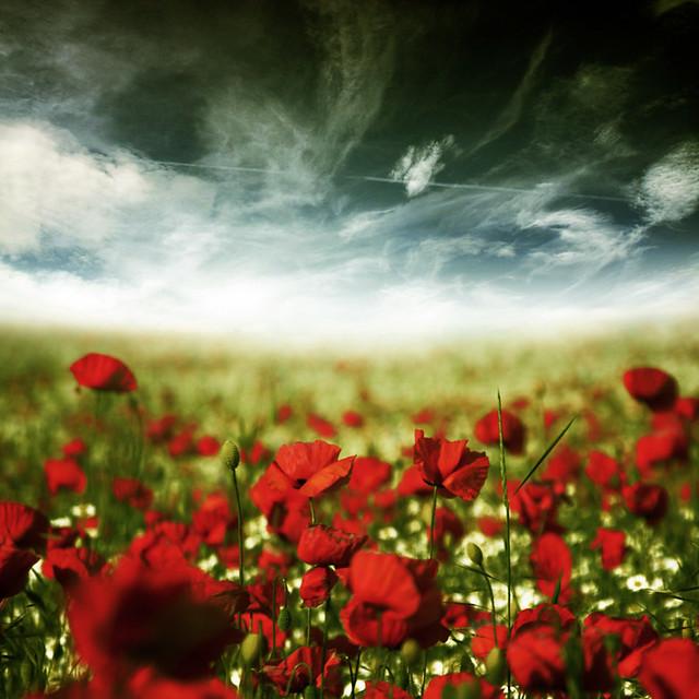 ~ my poppy dream ~