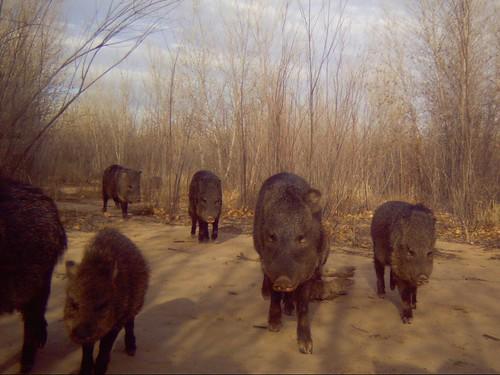 陷阱相機拍攝到的動物。(圖片:J. N. Stuart。)