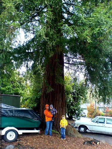 rachel, sequoia & nick passing by a neighborhood redwood tree   DSC02823