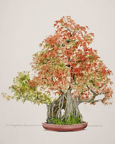 "Dick Rauh, Acer buergerianum, 2008  Watercolor on Arches 300 lb. hot press, 20"" × 16"". © Copyright Brooklyn Botanic Garden"