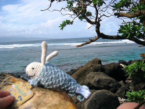 maui, hawaii, vacation, tropical, beach, sk… IMG_1725