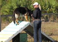 Tips For A Successful Training Your Dog Program 2
