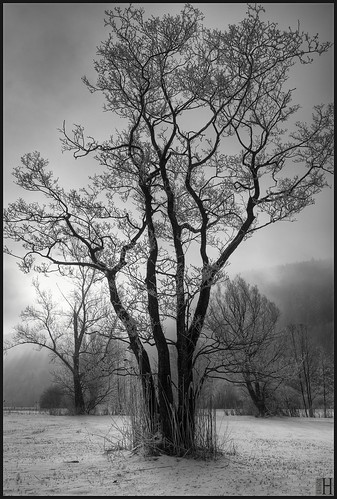 trees blackandwhite bw tree nature landscape austria friendship homage revival vorarlberg frastanz frastanzerried