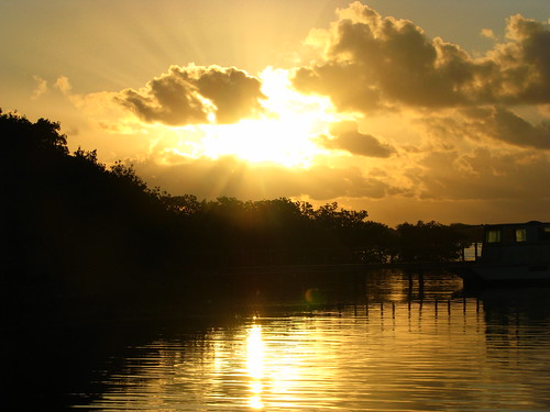 sunrise mangrove flare roatan explored sooc hondurasbayislands thesweetlightwascallingme dixoncove sogladiwentoutthismorning itwasnttiliwentoutpastthemangrovesthatisawthesunrising ishotthisunderexposedbecauseilikethesilhouetteaffectbutitwasmuchbrighterandevenmoreglorious