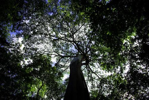 flowers green rainforest may trunk uganda terees spekeresort k200d k200dflowersmaymonkeyspentaxjjpspekeresortuganda monkeyspentaxjjp