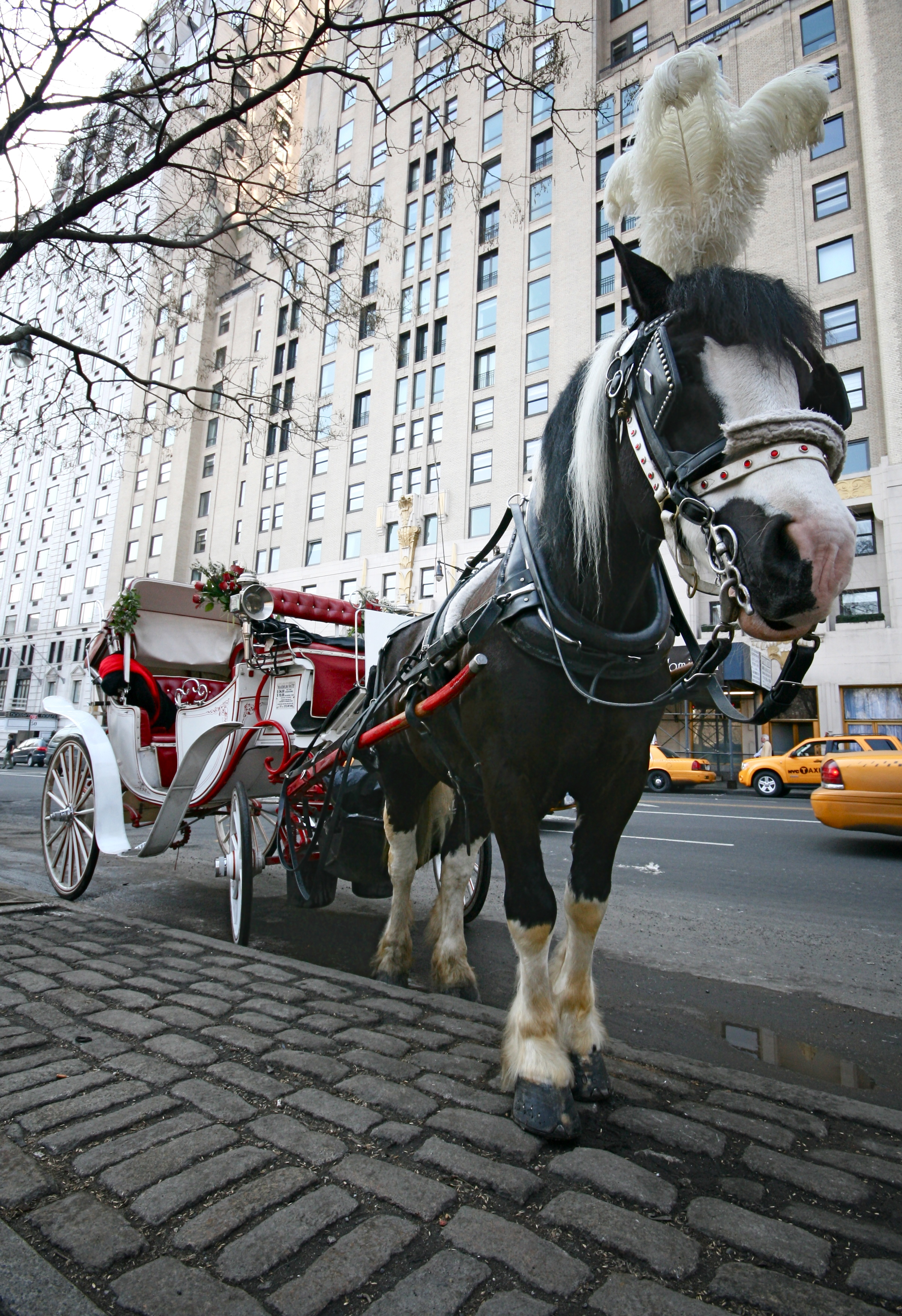 horse drawn carriage near central park west columbus circle flickr photo sharing. Black Bedroom Furniture Sets. Home Design Ideas