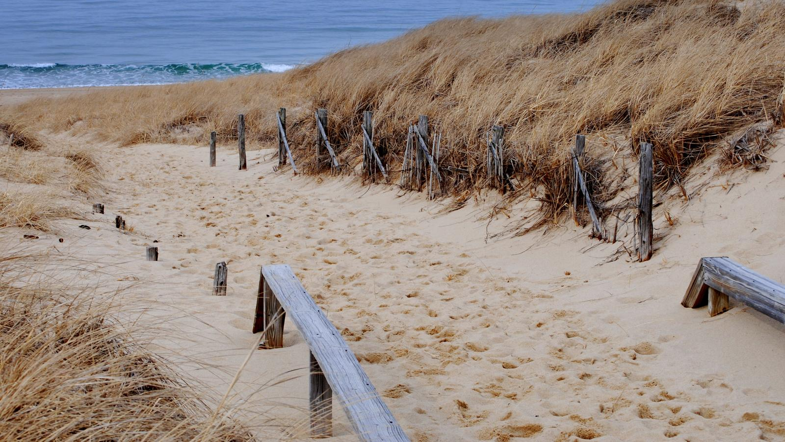 The Beach at Cape Cod