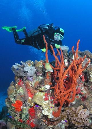 Mauritius Coral Reef