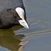 Aldenham Reservoir Birds April 09 22 by Rich Wigley