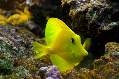 Trop fish tropical fish are pretty cool found this via for Cool pet fish
