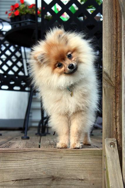 LITTLE DOG.....BIG LOVE