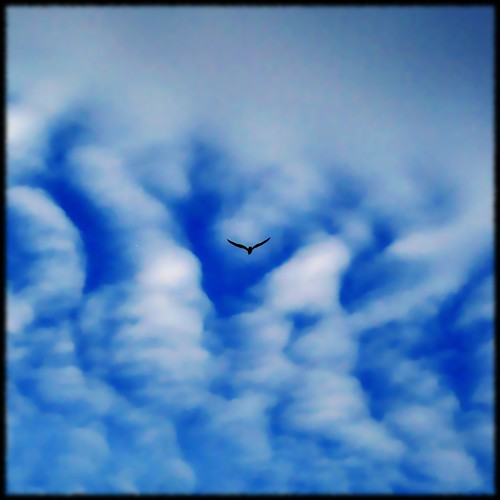 blue sky cloud white toronto ontario canada bird canon square freedom fly fb flight minimal powershot explore soar collegiate 1x1 centred eastyork explore83 fave10 a570 a570is fave50 a579is fave25 nowandhere davidfarrant