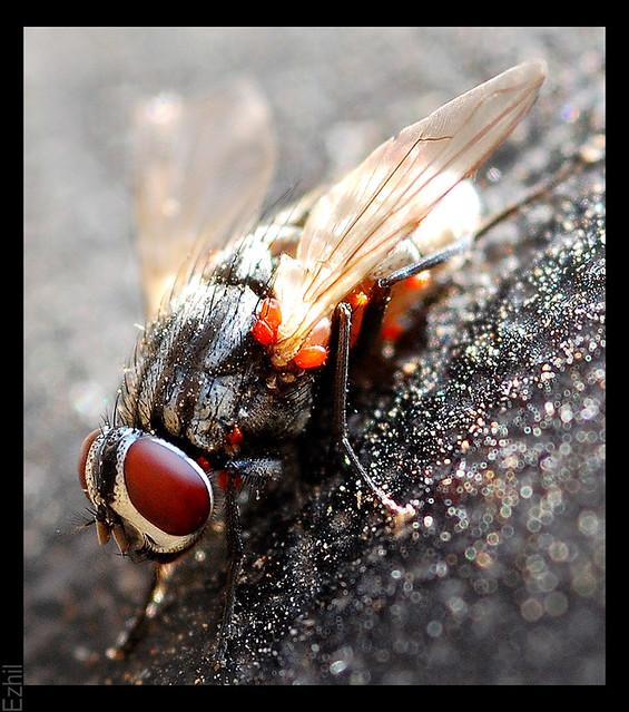 Creepy Dreadful Wonderful Parasites: Case of the Week 491  |Beautiful Parasites