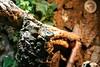 """<a href=""""http://www.flickr.com/photos/derflitzer/3234985897/"""">Photo of Varanus similis by Andreas Pott</a>"""