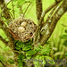 Mama Bird Awaits by Bella Allure Imagery | Brittany Miller