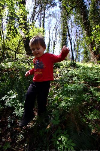 bounding down the fern covered hillside    MG 0401