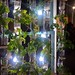Hydroponics at EyeBeam Gallery