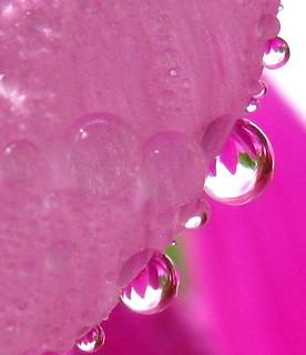 Pink Worlds