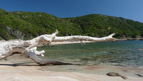 Branche échouée sur plage en Corse