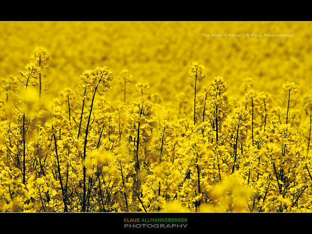 'The World Is Yellow' - Bavaria, Germany