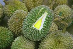 rambutan(0.0), plant(0.0), cempedak(0.0), produce(1.0), artocarpus(1.0), fruit(1.0), food(1.0), durian(1.0),