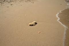 beach, sand, mudflat,