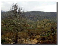 KurDisTan  kurD
