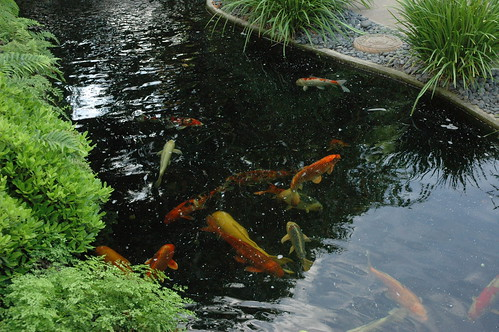 Koi pond at the curve in the path, cool shady area, orange white and gray, Meditation Garden - Self-Realization Fellowship, Encinitas, California, USA by Wonderlane