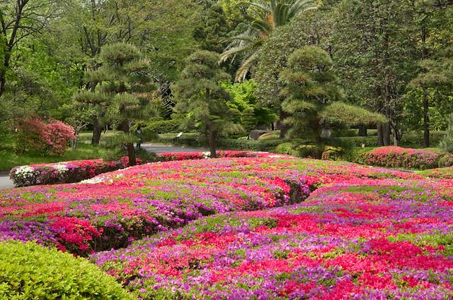 Azalea Garden Flickr Photo Sharing