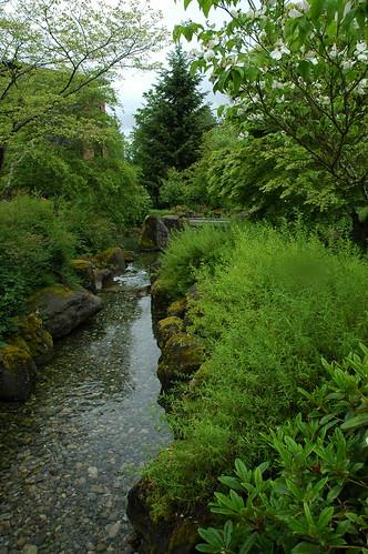 The Lovely Northwest, stream, trees, Microsoft Campus, Red West, Redmond, Washington, USA 3472 by Wonderlane