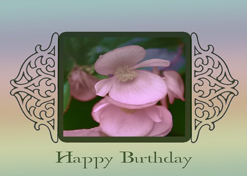 Happy Birthday Begonia Blossoms Card by Rustic Pixel
