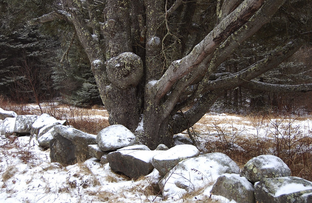 tree creatures with arms aloft in freezing rain