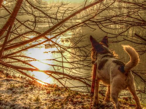 sunset dog sun snow river lumix hdr fz18