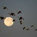 Fly me to the Moon by Melindros1152