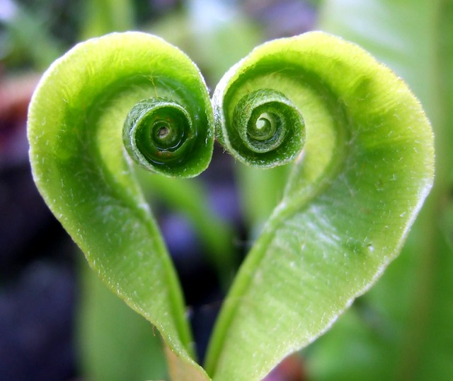 Nature's Green Heart