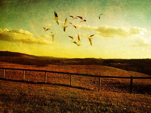 light sunset seagulls green bird texture field yellow clouds handwriting fence landscape golden virginia countryside fly gull gulls dream flare soar dreamscape skymeadows skymeadowsstatepark chrysti