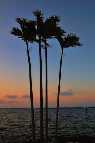 sun clouds sunrise florida palmtree floridakeys keylargofl sunnydays iloveit anawesomeshot floridays mm98