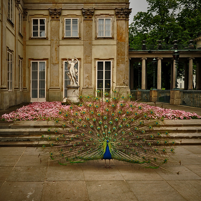 ~ Beautiful Peacock - Beautiful Flowers - Beautiful Sculpture and Beautiful Architecture ~