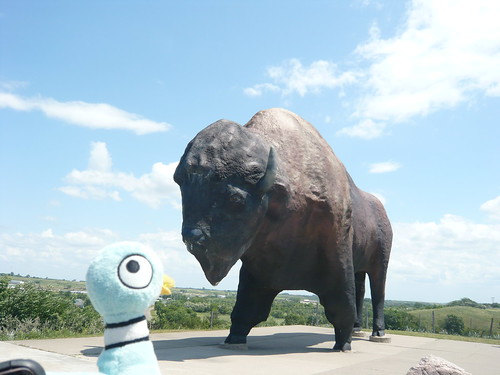 Pigeon Visits The World's Largest Buffalo