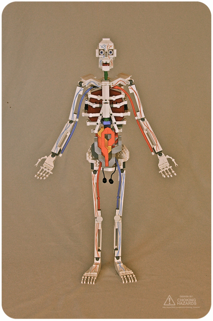 The Anatomy Of A Lego Human Body | Yin & Yang - The Blog