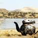 Tea Time! by Moataz Ali