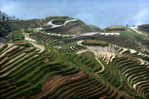 Longsheng - rice terraces