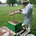 Spring Bee Check June 14, 2009