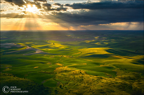 Golden Light on the Palouse