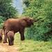 Tansania-Lake Manyara - Elefantenmama mit Kids,  021 v by roba66